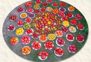 mandala-tomatoes